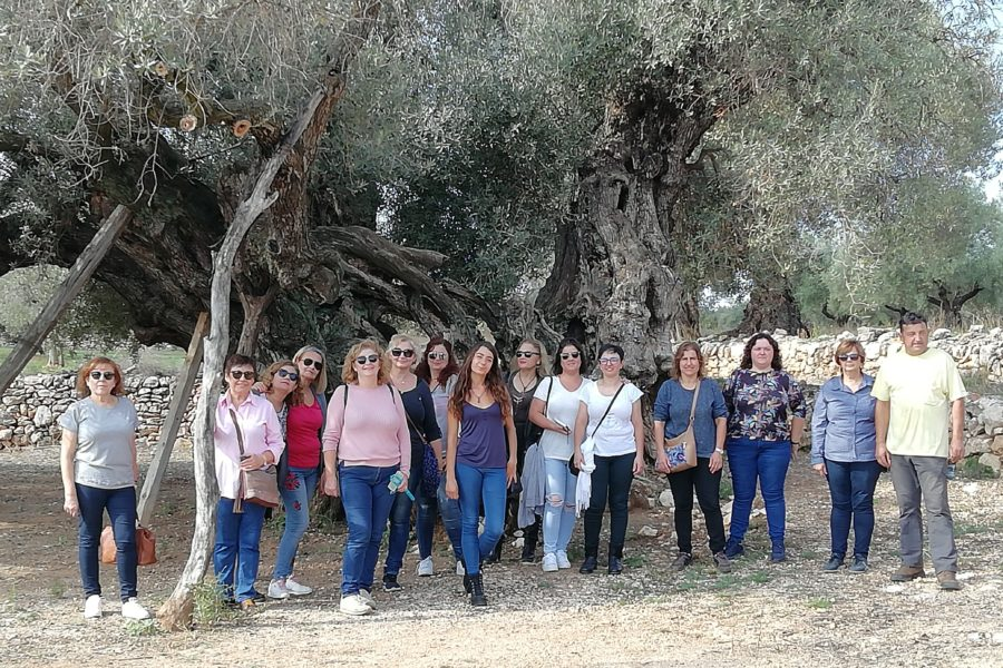 Aceite de olivos milenarios. Producción y oleoturismo